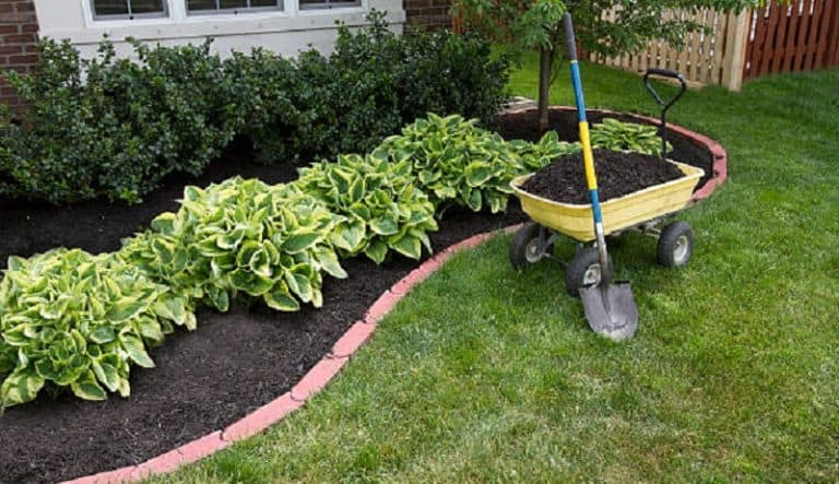 Best Weed and Feed for Lawns