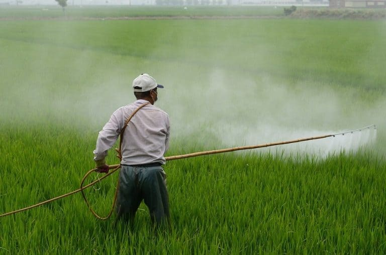 Best Insecticides for Your Vegetable Garden