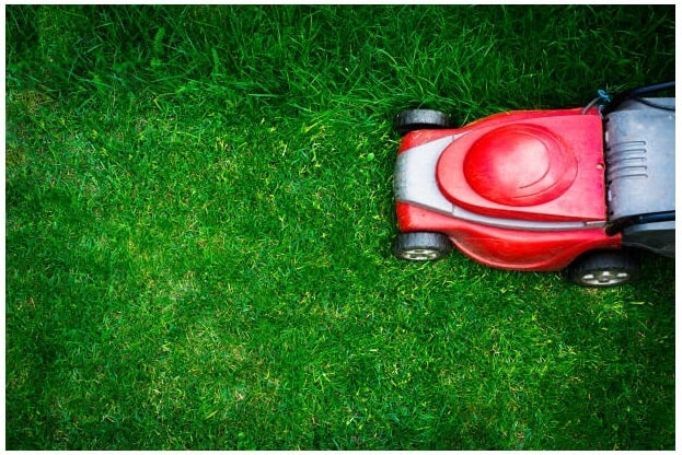 Lawn Mowers for St. Augustine Grass