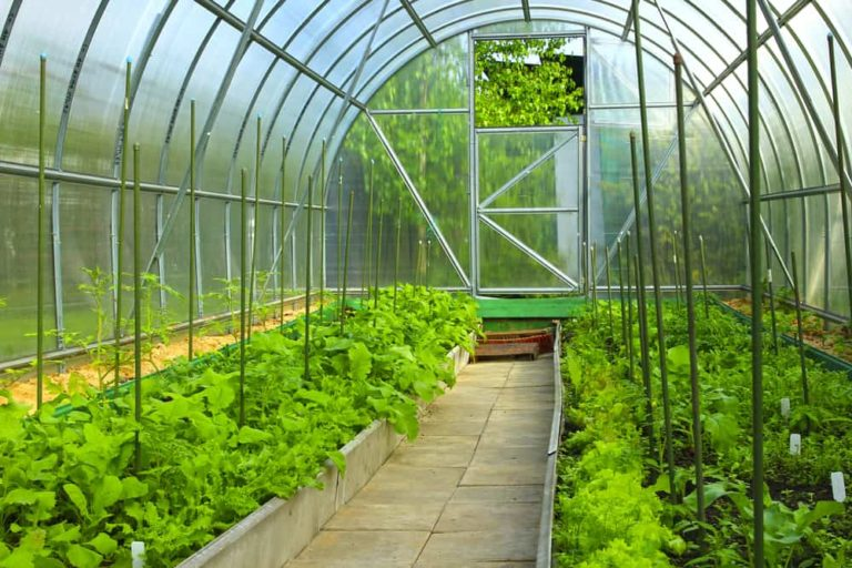 31 Plants to Grow in Your Greenhouse