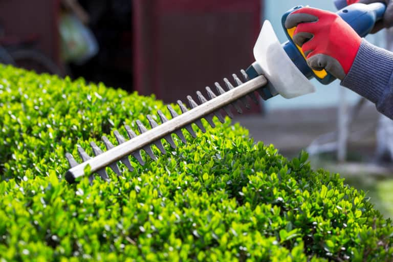 Best Cordless Battery Powered Hedge Trimmers