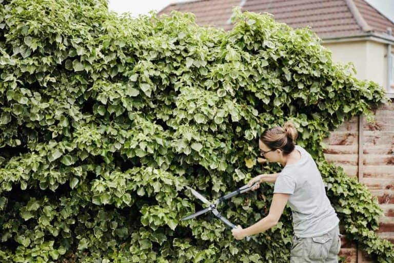 The Best Time to Trim Your Hedge