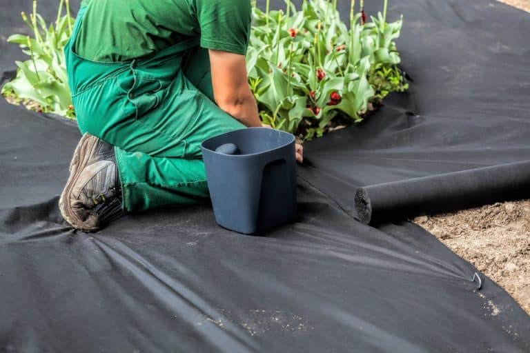 Best Weed Barriers for Landscaping