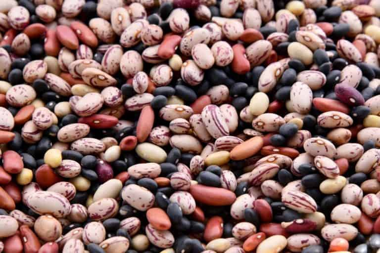 14 Companion Plants for Beans (And 3 To Avoid)