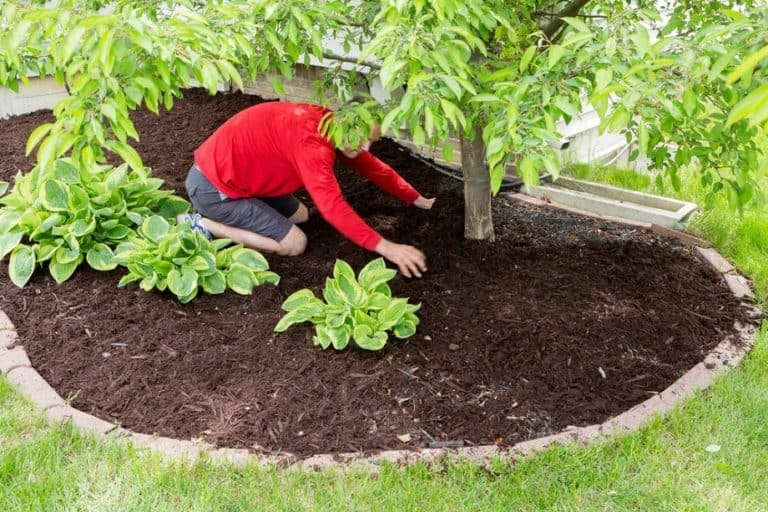 Do You Need to Remove Grass Before Mulching? (How to Do it Right)