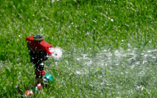 How To Bring Back Dead St. Augustine Grass